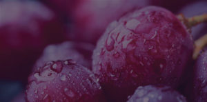 Abstract grapes header for wine club page