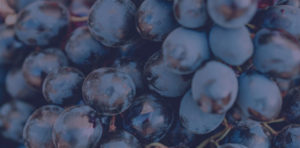 Abstract grapes header for Upcoming Events page
