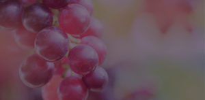 Abstract grapes header for the Food page