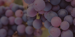 Abstract grapes for Our Story header